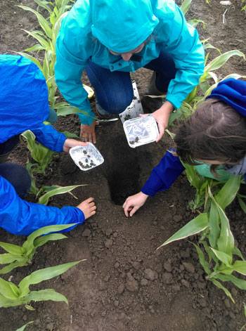 Biofunctool® : une méthode d'évaluation du fonctionnement du sol